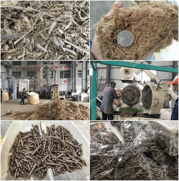 Bamboo Pellet Production Test for Malaysia Client