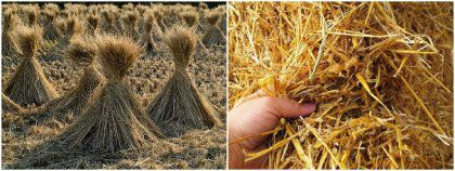 Make Your Own Straw Pellets